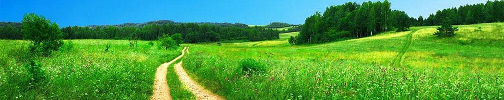responsabilidad institucional en el cuidado de parques y zonas verdes